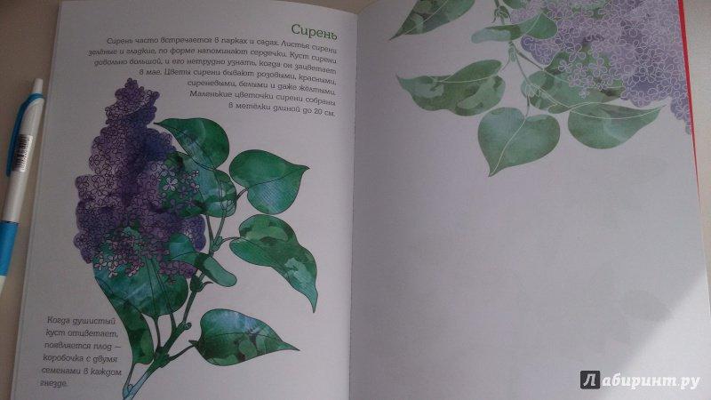 Иллюстрация 9 из 28 для Мой первый гербарий. Цветы и листья. ФГОС | Лабиринт - книги. Источник: Nyucta