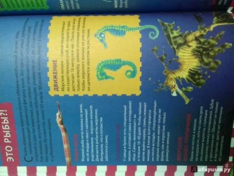 Иллюстрация 8 из 12 для Животные мира | Лабиринт - книги. Источник: ))) Светлана