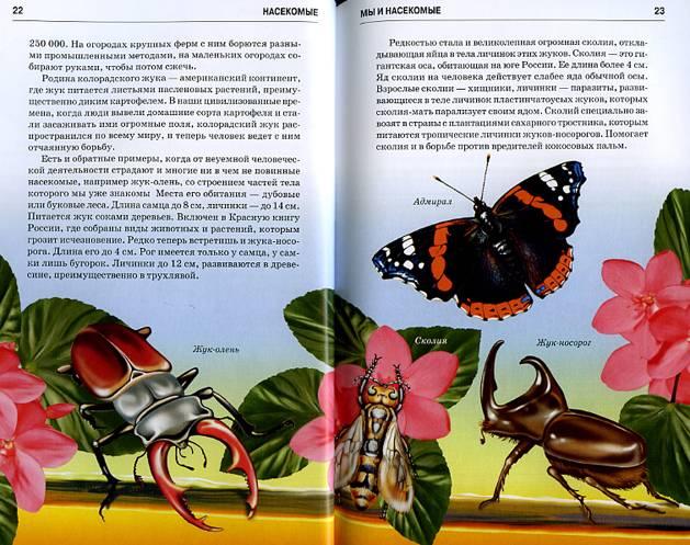 сказка про насекомых с иллюстрациями это животные