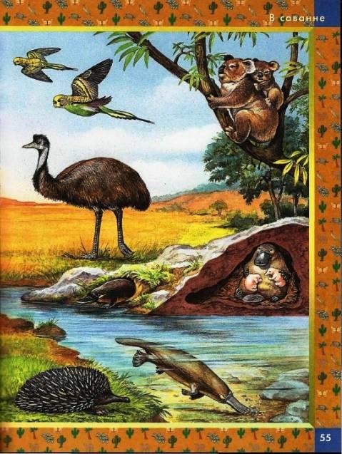 Иллюстрация 14 из 22 для Большая книга животных: Словарь в картинках | Лабиринт - книги. Источник: enotniydrug