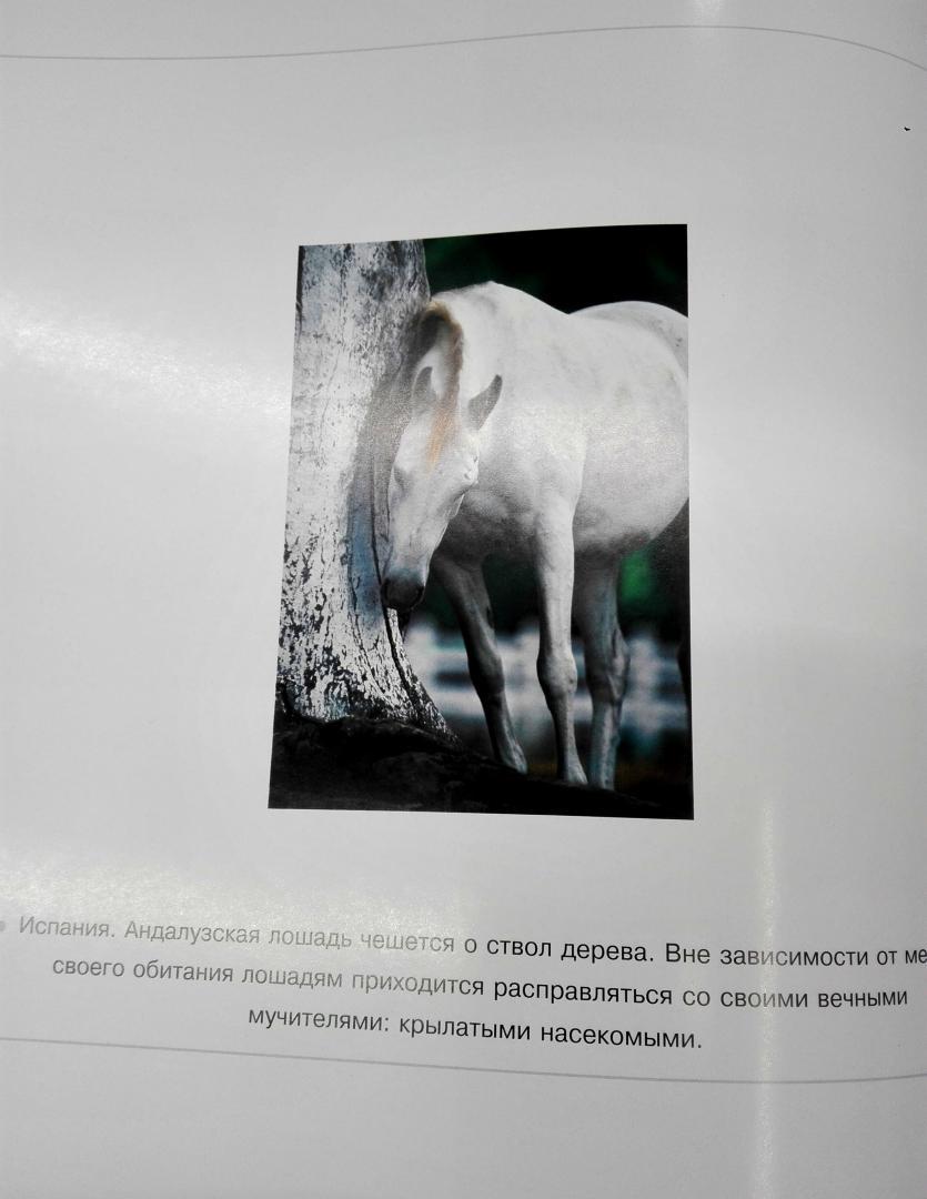 Иллюстрация 7 из 25 для Лошади. Самые лучшие фотографии | Лабиринт - книги. Источник: Сафиулина  Юлия