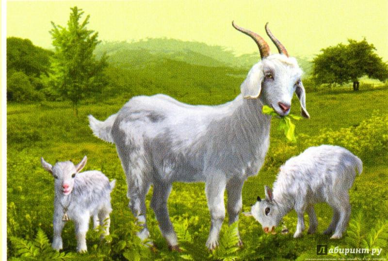 коза с козлятами веретенникова картинки линда это