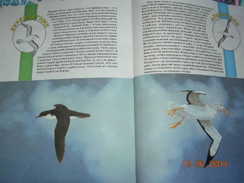 Иллюстрация 9 из 38 для Большая книга о животных для самых маленьких - Галина Шалаева   Лабиринт - книги. Источник: Соловей