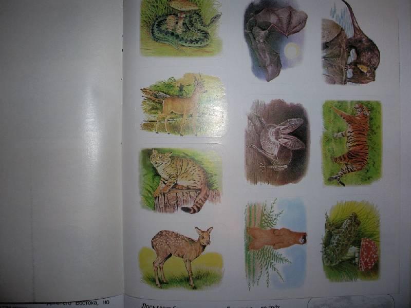 Иллюстрация 9 из 12 для Животные русского леса. Книжка с наклейками   Лабиринт - книги. Источник: Tiger.