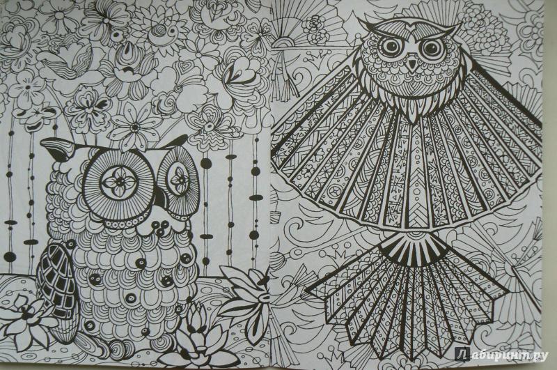 Иллюстрация 16 из 19 для Удивительные совы: книжка ...