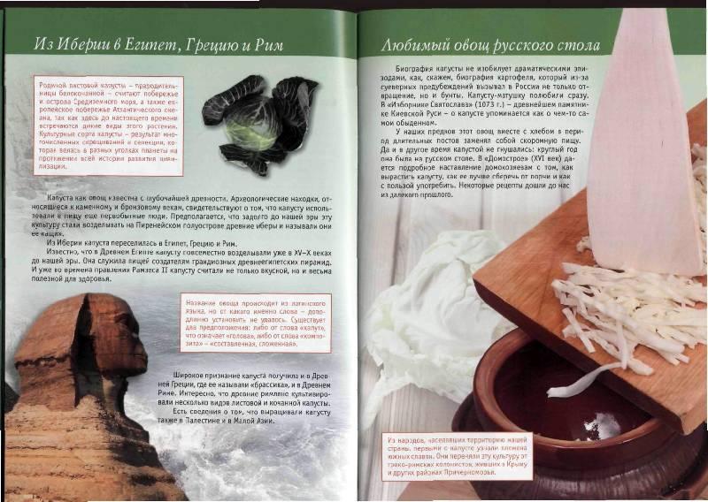 Иллюстрация 14 из 23 для Капуста в натуральном питании - Людмила Потемкина | Лабиринт - книги. Источник: Юта