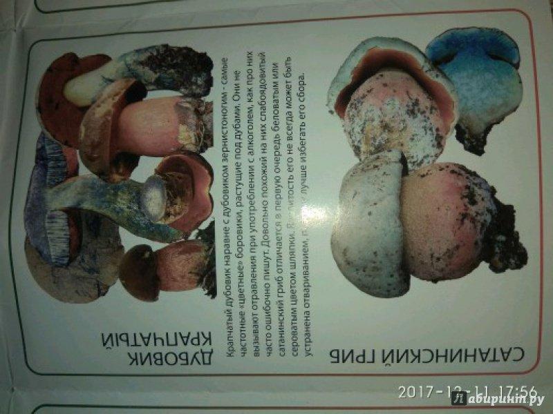 Ядовитые грибы россии вишневский
