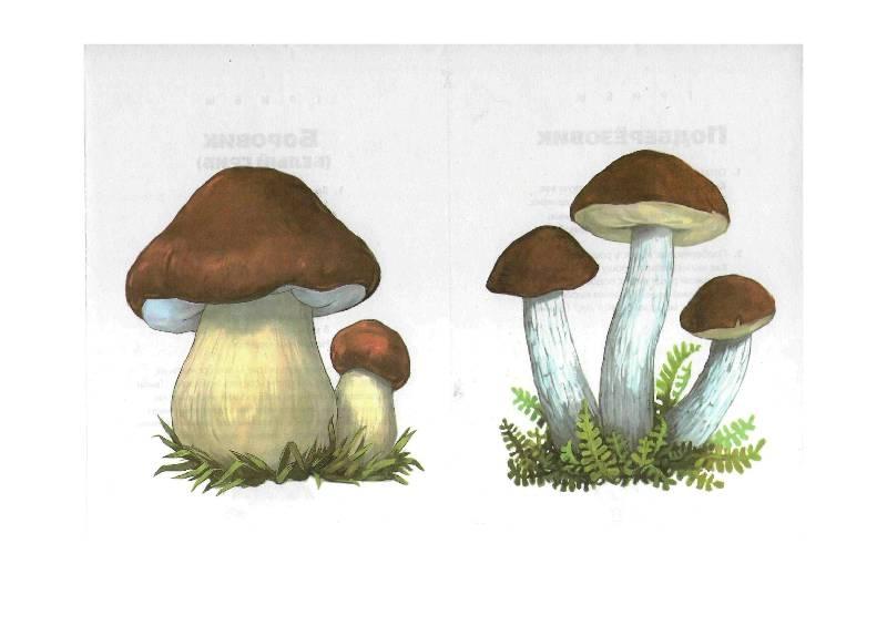 старый разрезные картинки по теме грибы ягоды время, когда