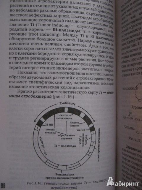 Иллюстрация 7 из 42 для Физиология растений. Учебник - Анатолий Веретенников | Лабиринт - книги. Источник: Евгения39