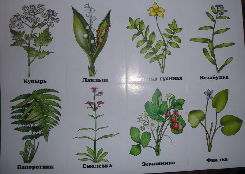 пожеланий лесные цветы картинки и названия цветов может