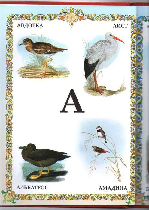 сейчас азбука птиц с картинками происходят