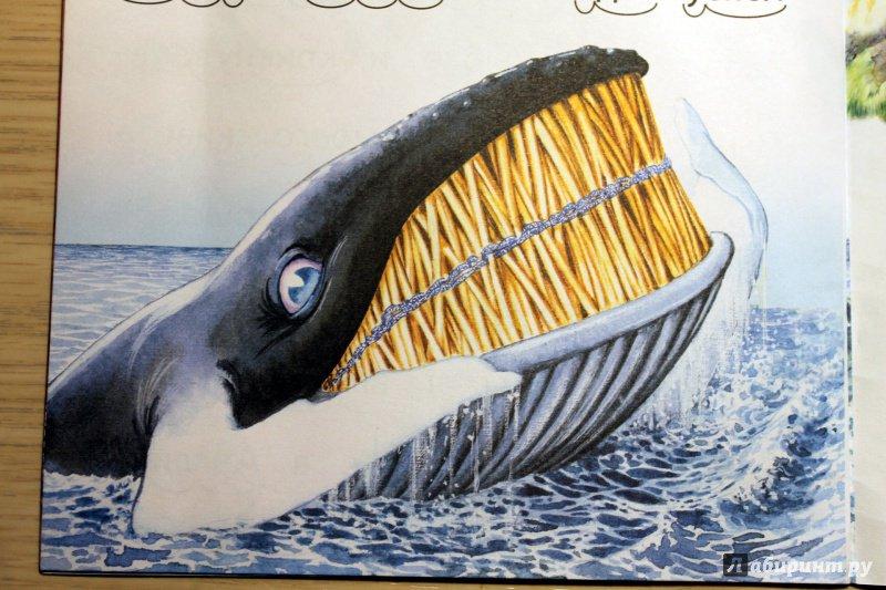 киплинг откуда у кита такая глотка картинки