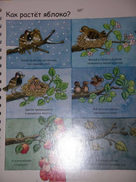 Иллюстрация 13 из 23 для Времена года. Малышам - Констанца Дрооп | Лабиринт - книги. Источник: Мариста
