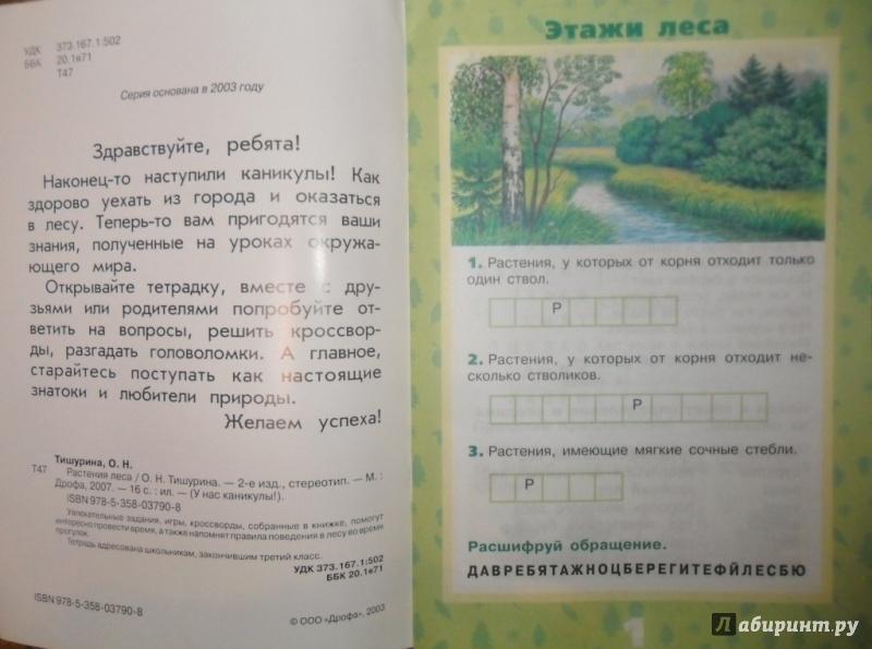 Иллюстрация 3 из 17 для Растения леса - Ольга Тишурина   Лабиринт - книги. Источник: Наталья