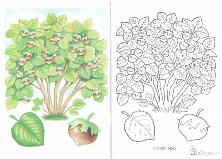 первые уроки раскраска кустарники и плоды