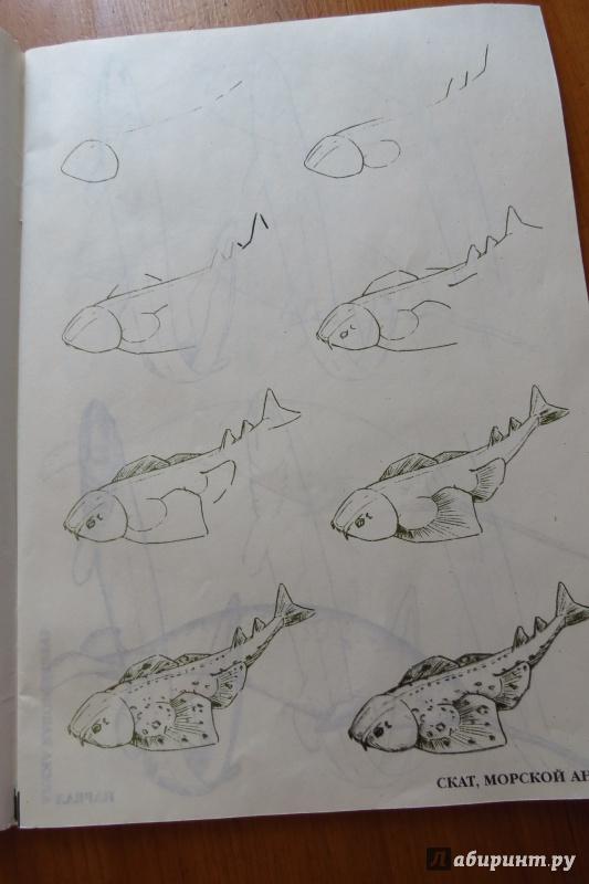 Иллюстрация 4 из 29 для Рисуем 50 акул, китов и других морских животных - Эймис, Бадд   Лабиринт - книги. Источник: Жар птица