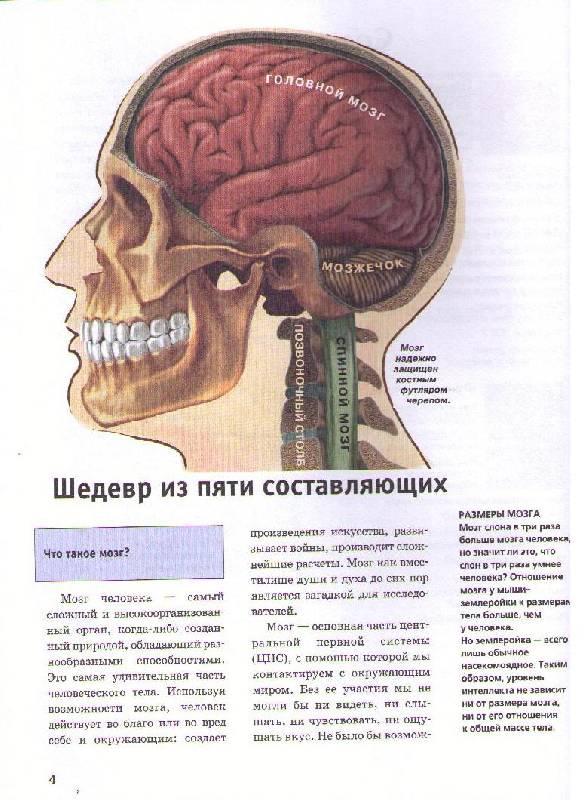 Иллюстрация 1 из 5 для Мозг - Моника Ресигер | Лабиринт - книги. Источник: Ya_ha