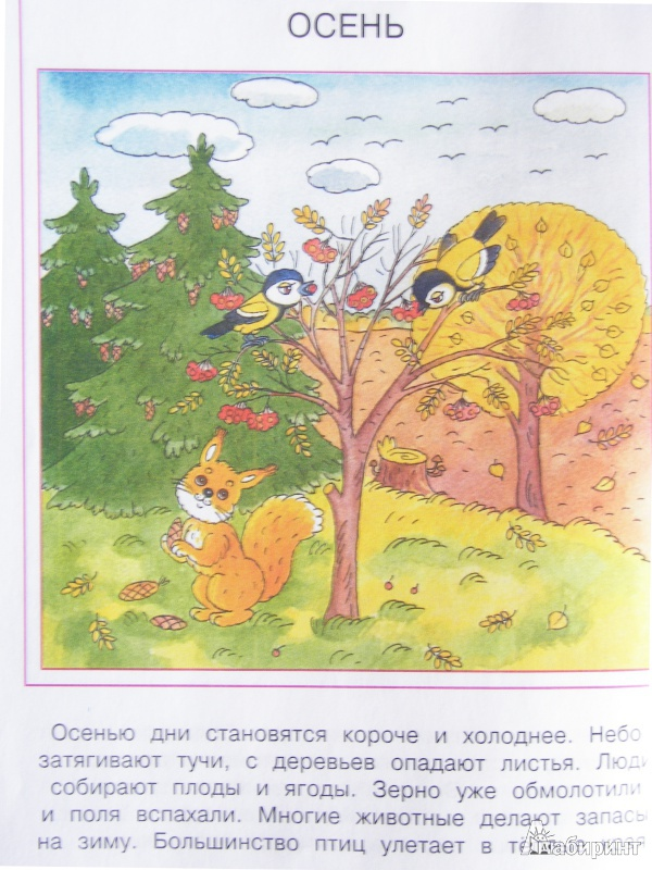 Иллюстрация 12 из 19 для Что нас окружает. Познаем мир. 4-5 лет - Ольга Земцова | Лабиринт - книги. Источник: Светлана Беспятова