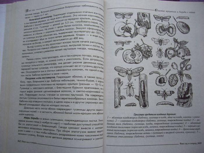 Иллюстрация 1 из 3 для Удачный сад, умный огород - Валентина Петрушкова | Лабиринт - книги. Источник: enotniydrug