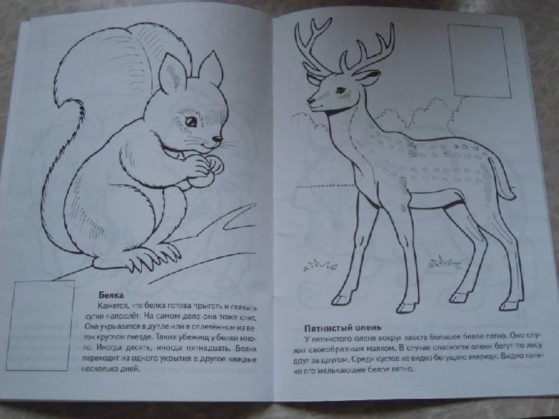 животные красной книги россии раскраски и описание