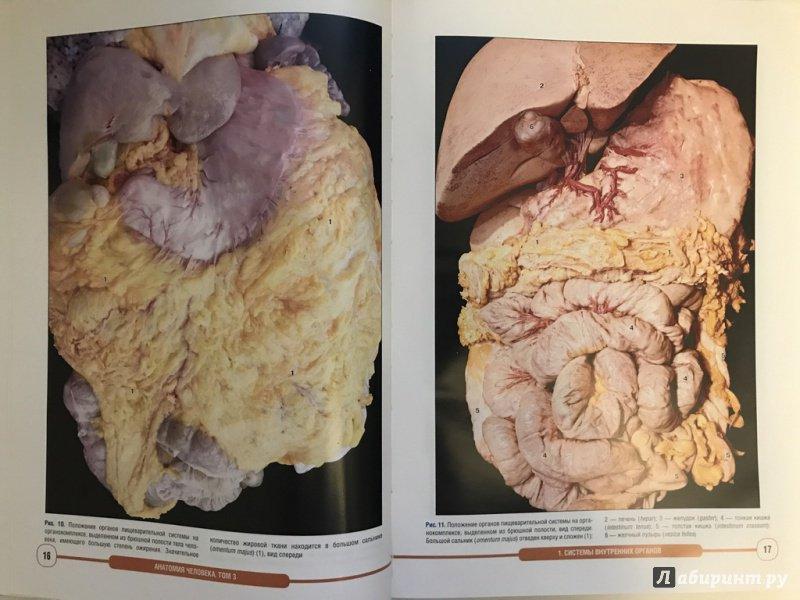 Картинки по анатомии внутренние органы фото с надписями спереди, раскраска
