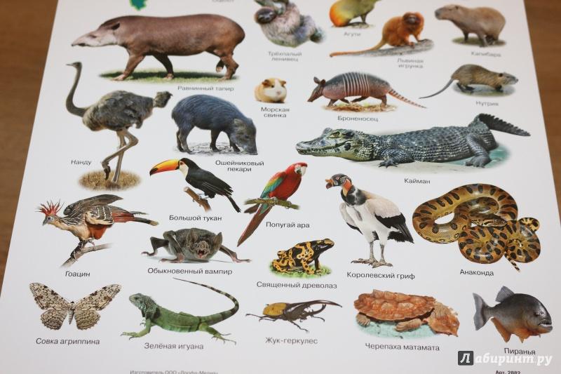 точно наиболее животные северной америки фото с названиями стоит недорого