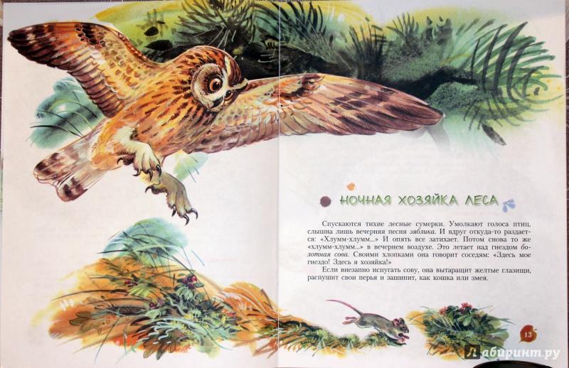 Иллюстрация 16 из 25 для Кто барабанит в лесу? Книга для чтения детям - Александр Тамбиев | Лабиринт - книги. Источник: E.B.