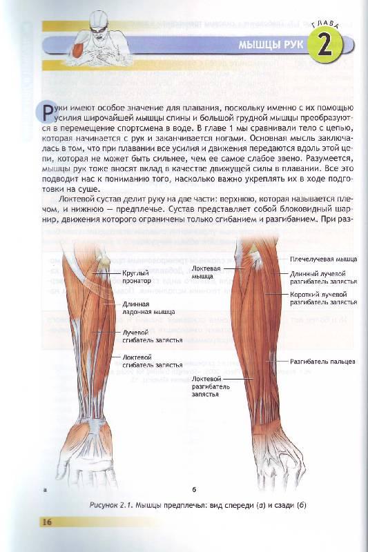 Иллюстрация 17 из 25 для Анатомия плавания - Йен Маклауд | Лабиринт - книги. Источник: Матрёна