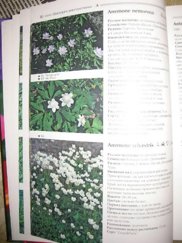 Иллюстрация 1 из 4 для Атлас цветущих растений - Бюрки, Томмазини   Лабиринт - книги. Источник: Chedi