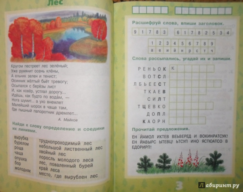 Иллюстрация 4 из 17 для Растения леса - Ольга Тишурина | Лабиринт - книги. Источник: Наталья