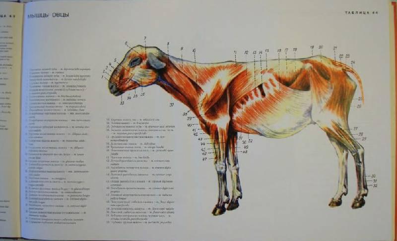 могут анатомический атлас животных в картинках доме всегда