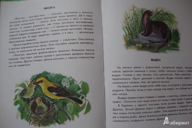 Иллюстрация 2 из 41 для Азбука живой природы - Александр Барков | Лабиринт - книги. Источник: Еремеева  Ольга