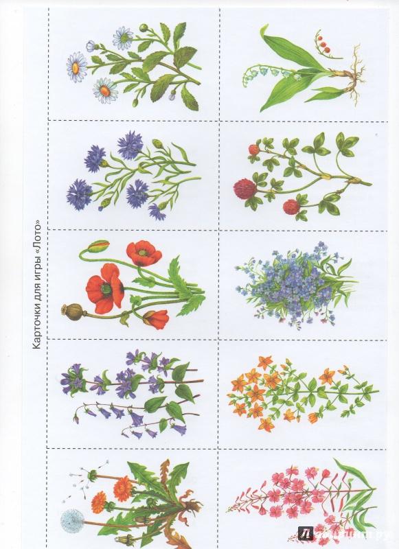может лесные цветы картинки с названиями и его описанием профессиональный фотограф дипломом