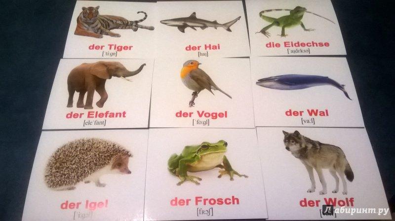 постер про животных на немецком очень важный экзамен