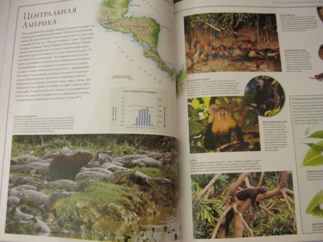 Иллюстрация 60 из 88 для Животный мир. Иллюстрированный атлас - Бамбарадения, Вудрафф, Гинзберг   Лабиринт - книги. Источник: М-и-л-е-н-а