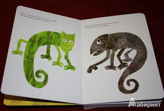 Иллюстрация 4 из 13 для Мечтательный хамелеон - Эрик Карл   Лабиринт - книги. Источник: КНИЖНОЕ ДЕТСТВО