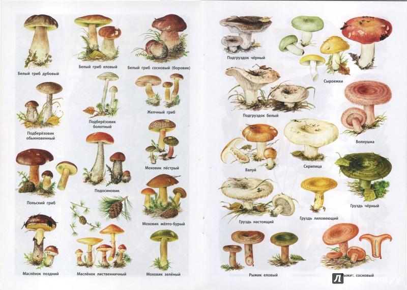 Все несъедобные грибы в картинках