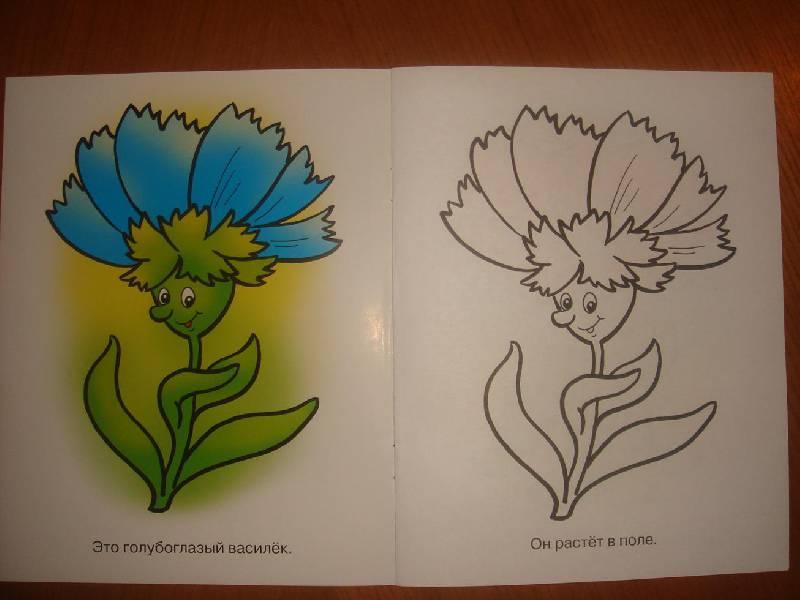картинки для раскрашивания цветов василек рецепт очень экономит