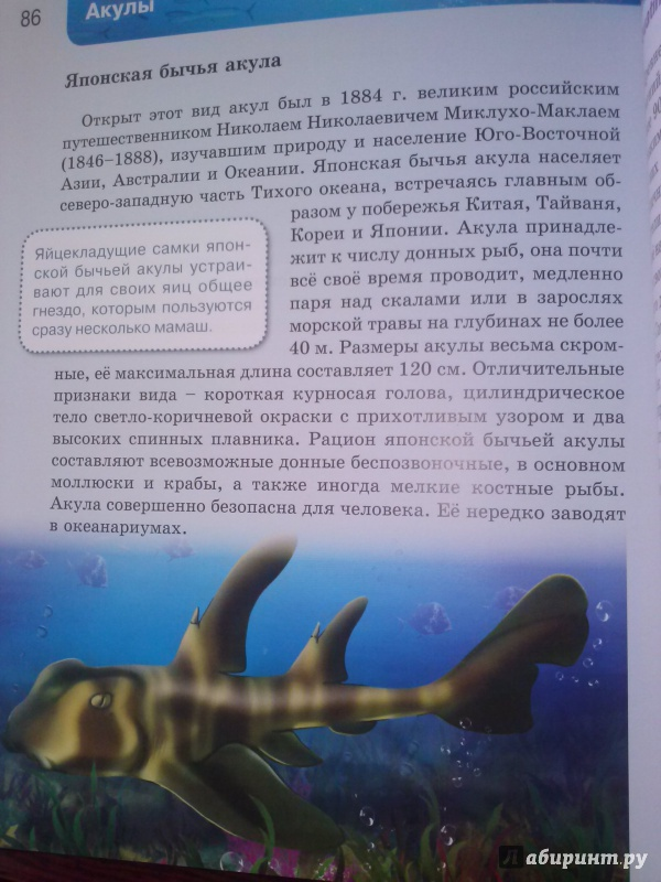 Иллюстрация 23 из 37 для Акулы | Лабиринт - книги. Источник: Лира