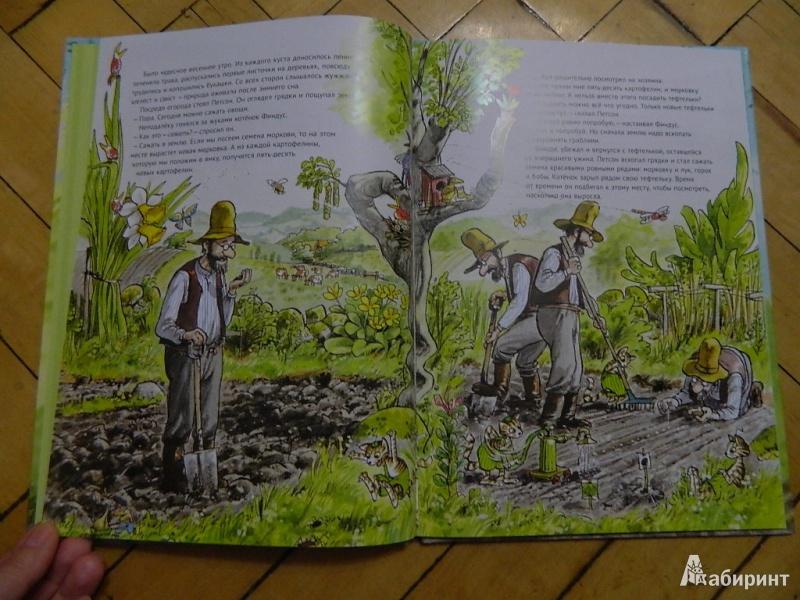 Иллюстрация 27 из 57 для Переполох в огороде - Свен Нурдквист | Лабиринт - книги. Источник: Мама Ольга