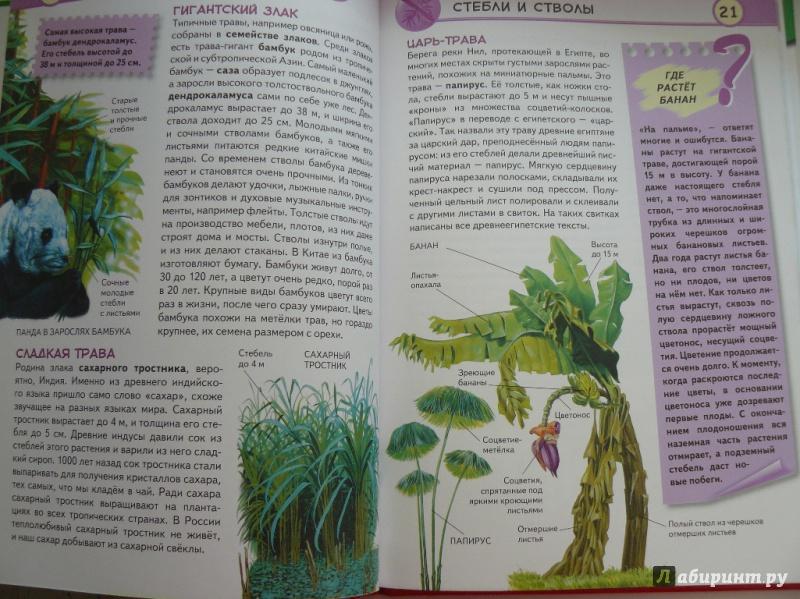 Иллюстрация 5 из 16 для Тропические растения. Удивительная флора жарких стран - Юлия Школьник | Лабиринт - книги. Источник: sv_33