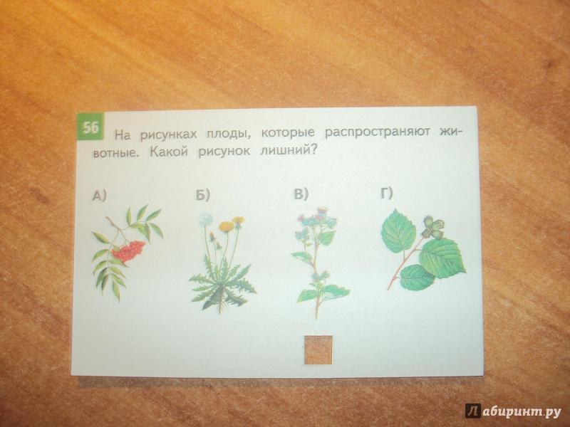 Иллюстрация 4 из 5 для Окружающий мир. 1-4 классы. Комплект тестовых карточек для начальной школы. ФГОС - Зоя Клепинина | Лабиринт - книги. Источник: mari-nulya
