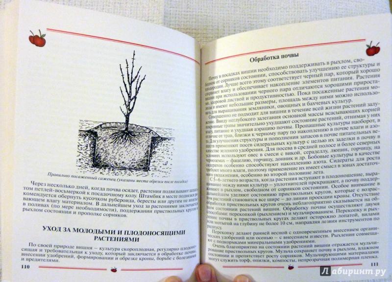 Иллюстрация 30 из 33 для Вишня, черешня. Пособие для садоводов-любителей - Еремина, Юшев   Лабиринт - книги. Источник: WhiteRacoon