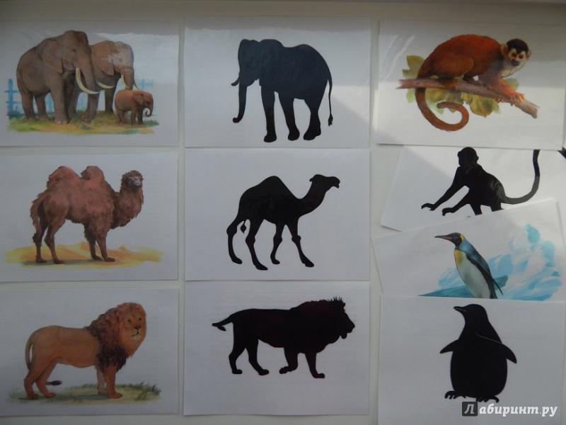 халкидики тематические картинки животные жарких стран приличную сумму можно