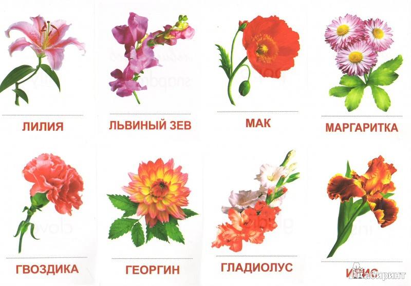 Садовые цветы с названиями картинки сочетании архитектурой