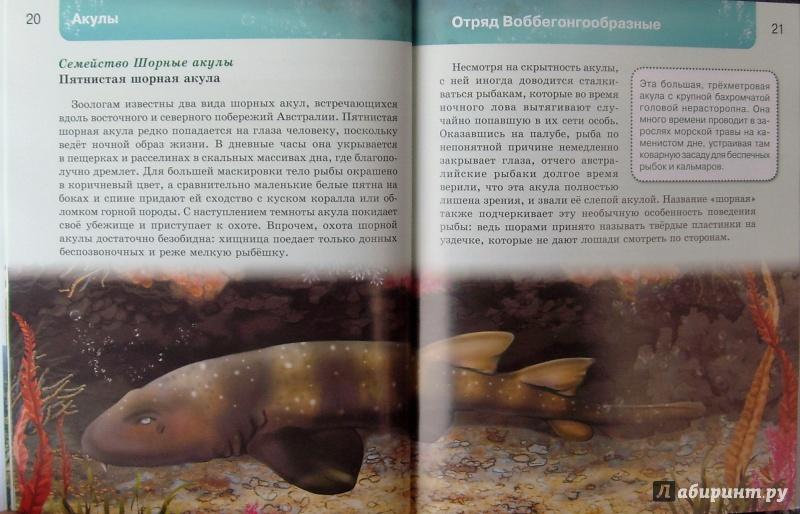 Иллюстрация 14 из 37 для Акулы | Лабиринт - книги. Источник: Соловьев  Владимир