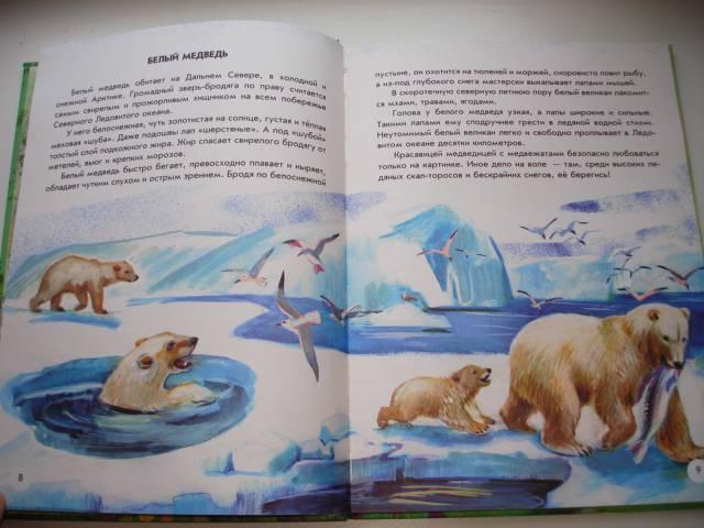 Иллюстрация 15 из 41 для Азбука живой природы - Александр Барков   Лабиринт - книги. Источник: Осьминожка