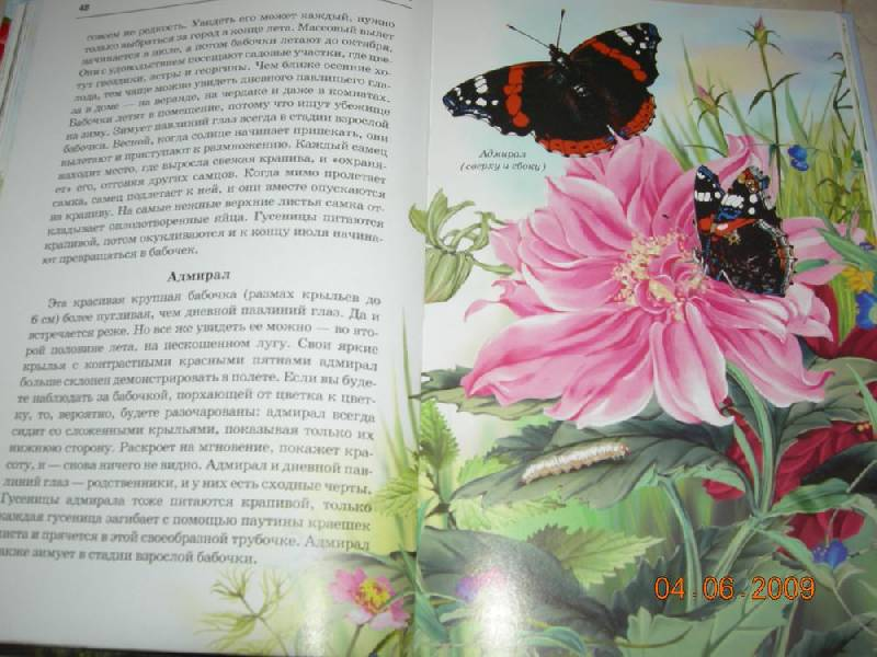 Соловей и бабочка хмельницкий картинки, кошек