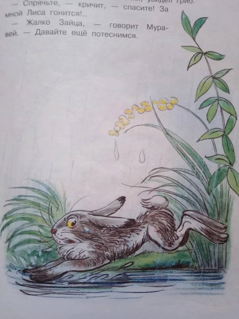 Иллюстрация 12 из 18 для Под грибом - Владимир Сутеев   Лабиринт - книги. Источник: Tan-17