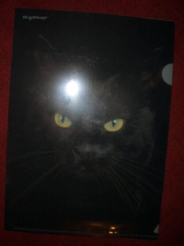 """Иллюстрация 1 из 5 для Папка-уголок (плотная) """"Cute Cat"""" (211010-16)   Лабиринт - канцтовы. Источник: Mex-mex"""